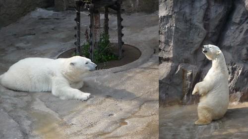 你拍攝的 旭山動物園8。