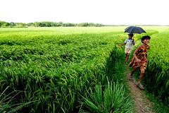 Childhood... (Shad0w_0f_Dark) Tags: girl umbrella child paddy ttl durgapur runningkid mymensing canon40d birishiri tokina1116