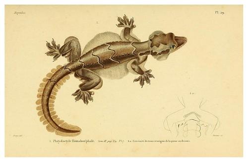 002-Erpétologie générale ou Histoire naturelle complète des reptiles 1834