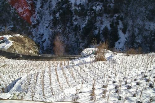 葡萄園現在都是雪 當然也沒葡萄了