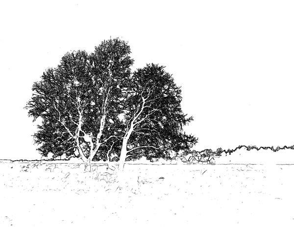 Träd på åkern