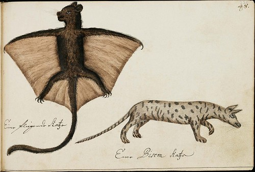 bat with tail and canine