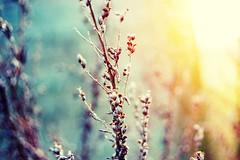 Light (ingephotography) Tags: blue light sun white flower nature beautiful sunshine yellow outside licht blauw branch bokeh branches plan geel wit zon tak buiten takken zonlicht bloem takjes anawesomeshot