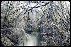 IceStorm09-12 (chuck.heeke) Tags: kentucky icestorm louisville january2009