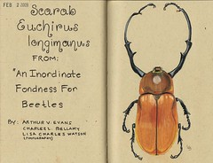 Beetle a Day (GunnerGirl) Tags: art illustration bug insect sketch journal beetle sketchbook draw scarab entomology coleoptera