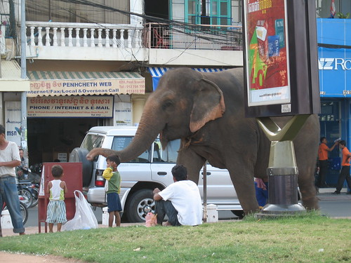 Sam Bo, the city elephant