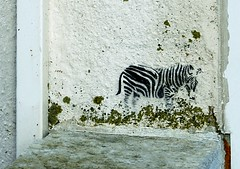 Zebra graffiti (@Doug88888) Tags: pictures uk england white black art digital canon geotagged eos graffiti photo paint image south awesome united picture gimp kingdom images best photograph zebra excellent buy february dslr 2009 purchase lyme regis feb26 feb09 400d feb2009 doug88888