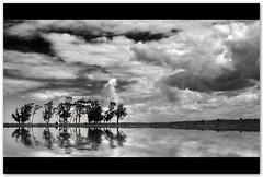 Donde nos llev la imaginacin... (Silvia de Luque) Tags: trees sky bw water uruguay agua rboles bn cielo rocha antoniovega alhambra2006