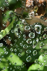 (HannahKarsen) Tags: macro nature water spiderweb cobweb waterdrops