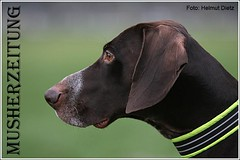 Portrait-Hound-HD085739
