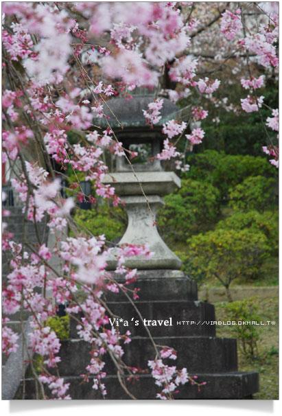 【京都春櫻旅】京都旅遊景點必訪~京都清水寺之美京都清水寺21