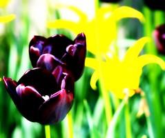 ' (mightyquinninwky) Tags: flowers flower landscape geotagged purple landscaping explore why picnik usi flowerbeds ohiorivervalley explored evansvilleindiana usicampus geo:lat=37964358 geo:lon=87676866 exploreformyspacestation
