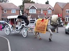 A white horse for all Indian wedding occasions Indian wedding