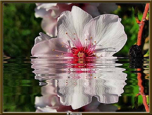 La Flor Ahogada. Historia De Un Amor Imposible