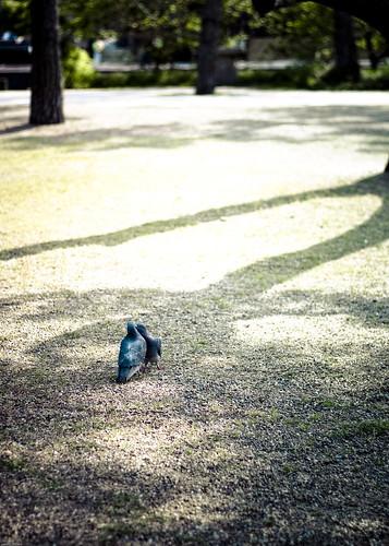 14999 : Love Birds