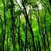 theresa green