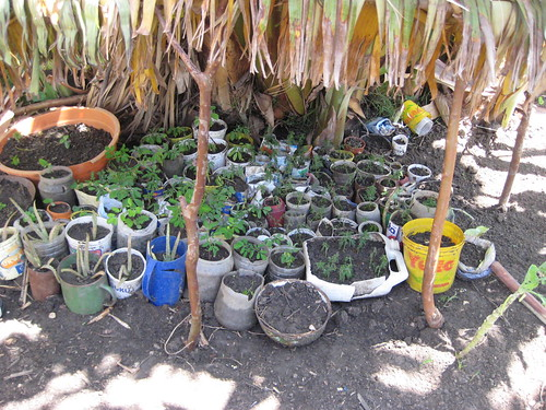 Bottles and plants in Kenya
