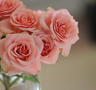 ~Life is like a rose...beware of the thorns~