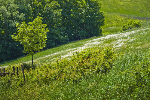 Daisy meadow #5