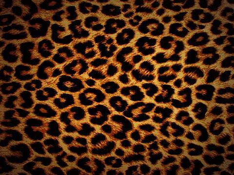 blackberry 8900 wallpaper. Leopard BB 8900 Wallpaper :)