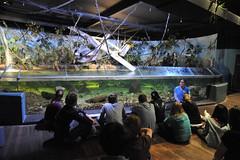 Melbourne 2009 - Melbourne Aquarium (12)