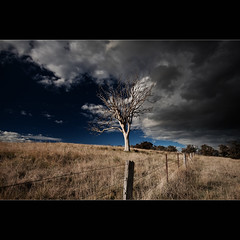 This barren land. The bone white limbs, clawing at the sky, searching for much needed water ([ Kane ]) Tags: sky tree grass clouds fence dark landscape moody farm australia deadtree nsw qld queensland kane drama baron gledhill kanegledhill kanegledhillphotography
