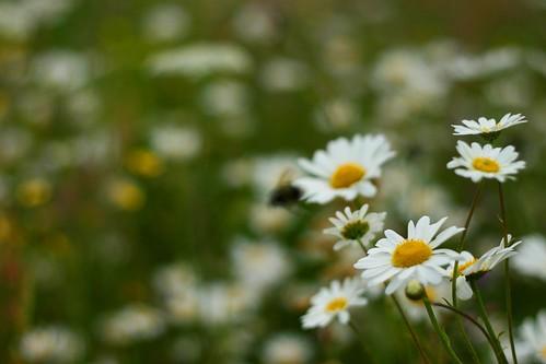 flowermeadow2