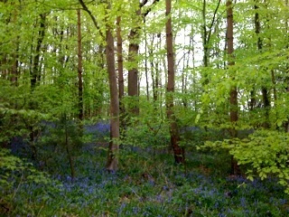 Groombridge place woods