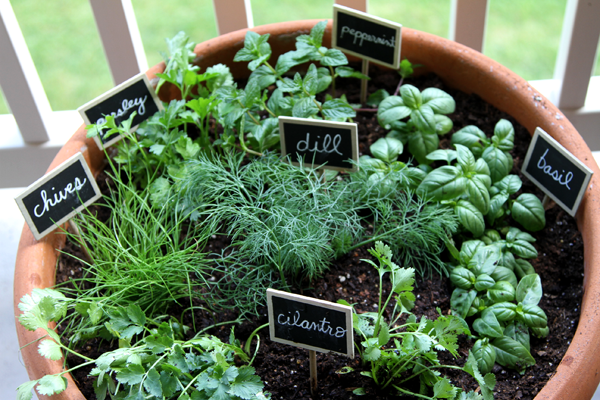 One Pot | Fun and Easy Indoor Herb Garden Ideas