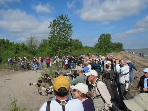 Kirtland's Warbler crowd
