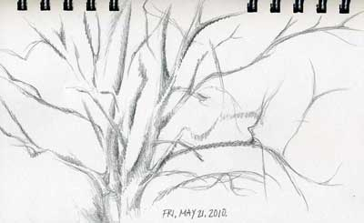 5-21-2010, Tree Branch Sketch