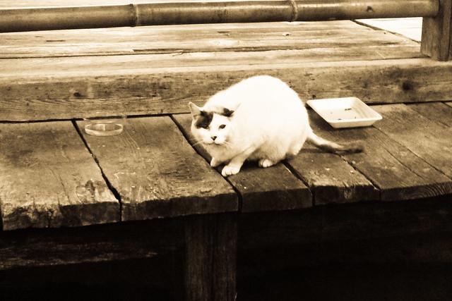 Today's Cat@2011-05-24