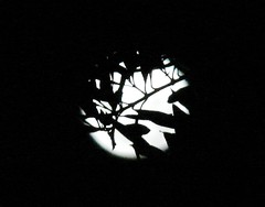 Moon with Leaves (CliveP) Tags: sky moon night dsch2