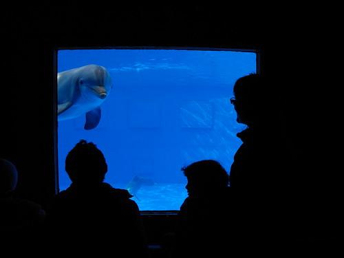 Dofí Zoo Barcelona