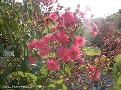 Botanic Gardens8