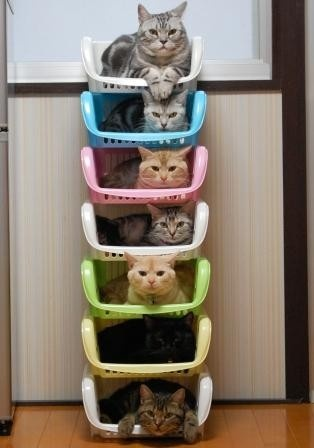 imagesstackable-20cats