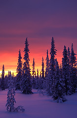 Polar glow (Antti-Jussi Liikala) Tags: winter light sunset red white snow cold reflection tree forest suomi finland evening purple horizon north lapland polar spruce artic lappi auringonlasku sodankyl anawesomeshot aplusphoto vuotso