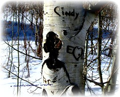 Trees That Talk (mountainbeliever) Tags: trees winter woman nature forest visions colorado images aspens talking picnik apparitions colorfulcolorado