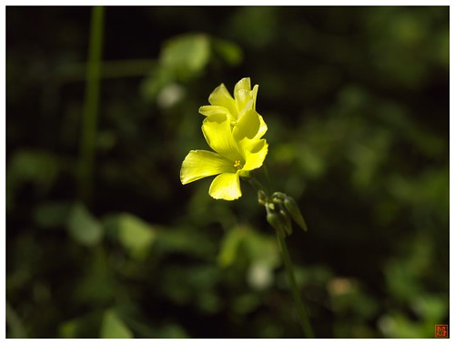 Yellow Flower 090213 #03