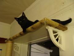 Spot likes it on high (retiredat61) Tags: cats pets animals kitties