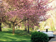 Pink tree envy