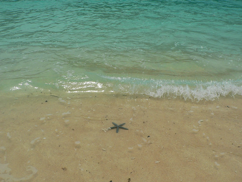 just starfish on the beach