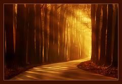 Larspiration (hvhe1) Tags: wood morning light sunlight tree nature forest dawn golden bravo searchthebest interestingness1 best rays beech veluwe veluwezoom specnature spectacularnature hvhe1 hennievanheerden diamondclassphotographer flickrdiamond bratanesque vosplusbellesphotos