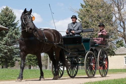 horse usa mare carriage mariah mn farmington morganfresian dakotacityheritagevillage