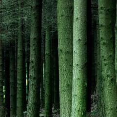 Pilat #2 (arnaud brihay) Tags: wood tree nature diary journal arbre forêt massif pilat intime pélussin