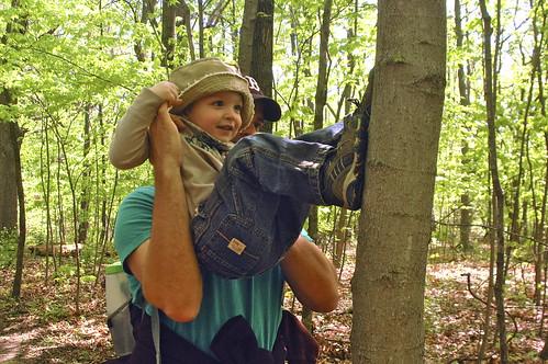 """""""climbing"""" a tree"""