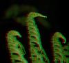 3D Ferns01