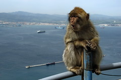 Gibraltar Monkey (Vlastula) Tags: sea baby water animal fauna monkey europe ship gib vessel scream winstonchurchill ape handrail screaming yelling oohhh gibraltar apes ooooh macaque aaaah monos aaahhhh moneky barbary straitofgibraltar macacasylvanus supershot upperrock
