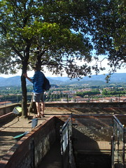 Lucca - Torre Guinigi - 02