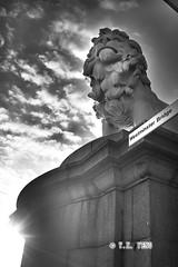 Lion of England (Adrian Yeng) Tags: blackandwhite london westminsterbridge lionofengland